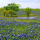 Texas Hill Country in Bloom by Mary Campbell