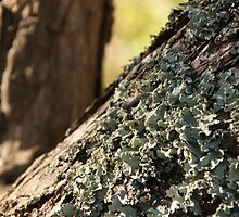 Lichen this Fungai  by John Billing