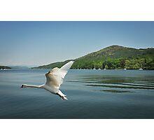Swan Lake Windermere Photographic Print