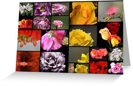 Isa's Garden by Donna Adamski