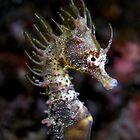 Punk Seahorse by daveharasti
