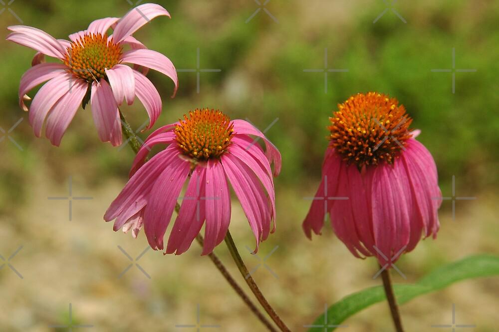 Flowers by PhOtOgaljan