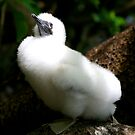 Red-Footed Booby Chick by Gina Ruttle  (Whalegeek)