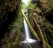 First Creek Gorge by Travis Easton