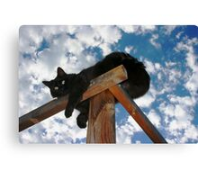 Bolly, Skyward Canvas Print
