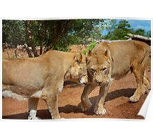 Lionesses Poster