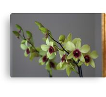 Orchid Flower Mirrored Image Canvas Print
