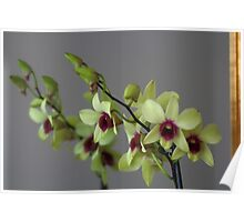 Orchid Flower Mirrored Image Poster