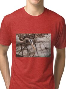 Great Blue Heron hunting Tri-blend T-Shirt