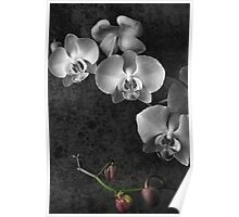 Fading Beauty Poster