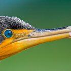Cormorant by Luis Ferreiro