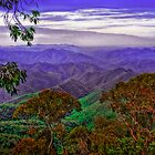 Vista views of Dorrigo National Park - NSW by Jennifer Craker