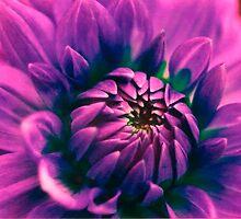 Opening flower by Carlee Bowles
