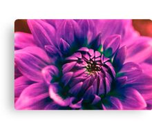 Opening flower Canvas Print