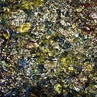 Coloured rocks in water by Amanda Gazidis