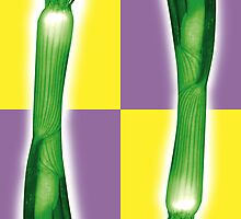 Spring onion by Tony  Hardy