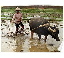Preparing the fields for the rice crop - North Vietnam Poster