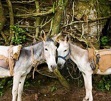 Donkey by juan jose Gabaldon