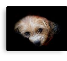 Traumatised Again! Canvas Print