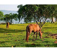 Laguna Azul, Tarapoto, Peru Photographic Print