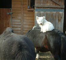 Alfie on Horseback by Sheila Laurens