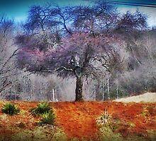 Mother Tree by JRobinWhitley