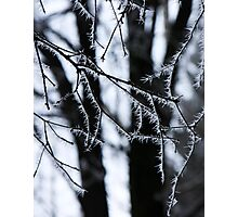 Icy needles ! Photographic Print