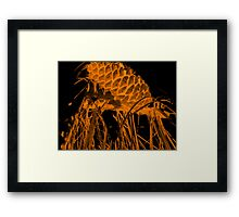 Pine Cone in the Fire Framed Print