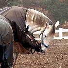 Ahhh! horse romance by nastruck