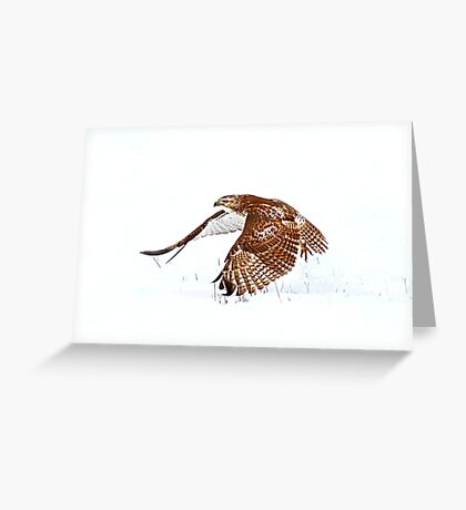 Red-tailed Hawk - Uprising Greeting Card