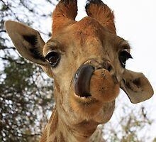 Giraffe by Keith Jones
