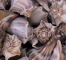 Whelks by May Lattanzio