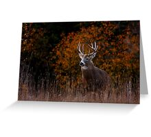 Early fall rut - White-tailed Deer Greeting Card