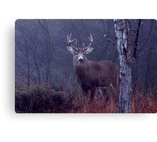 Buck - White-tailed Deer  Canvas Print