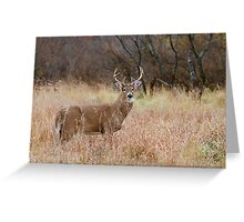 Which way did she go? - White-tailed Buck Greeting Card