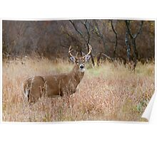 Which way did she go? - White-tailed Buck Poster