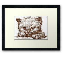 Sweetest Kitty Cat Framed Print