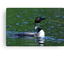Long neck Loon - Common Loon Canvas Print
