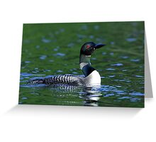 Long neck Loon - Common Loon Greeting Card