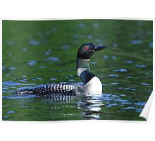 Long neck Loon - Common Loon Poster