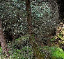 Highland Forest by Roberto Herrett