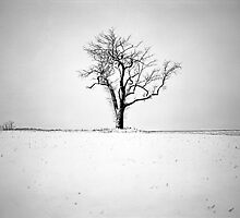 Lonely Tree by DanielRegner