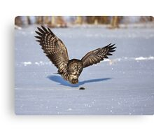 Great Grey owl catches a mouse Canvas Print