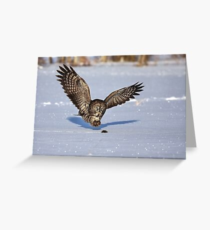 Great Grey owl catches a mouse Greeting Card