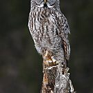 The Phantom - Great Grey Owl by Jim Cumming