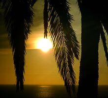 Sun Tropics by Megan Martin