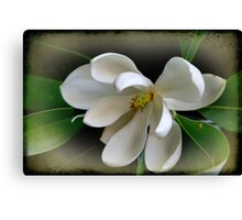 Sweet Bay Magnolia Canvas Print