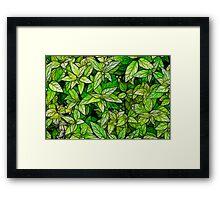 Plant Texture Framed Print