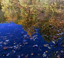 Autumn in The Pond by LeeMascarello