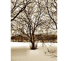 Crabapple Trees Early Spring Snow Photographic Print